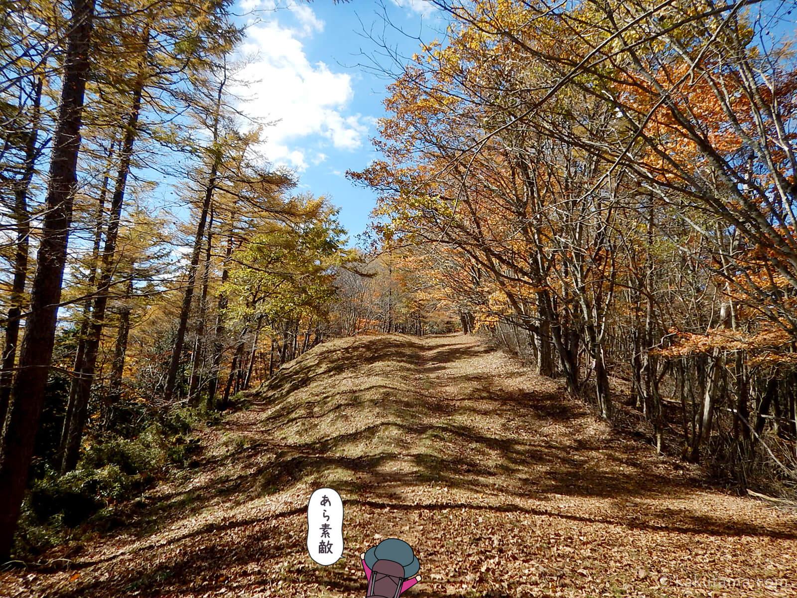 鷹ノ巣山避難小屋付近の紅葉写真4