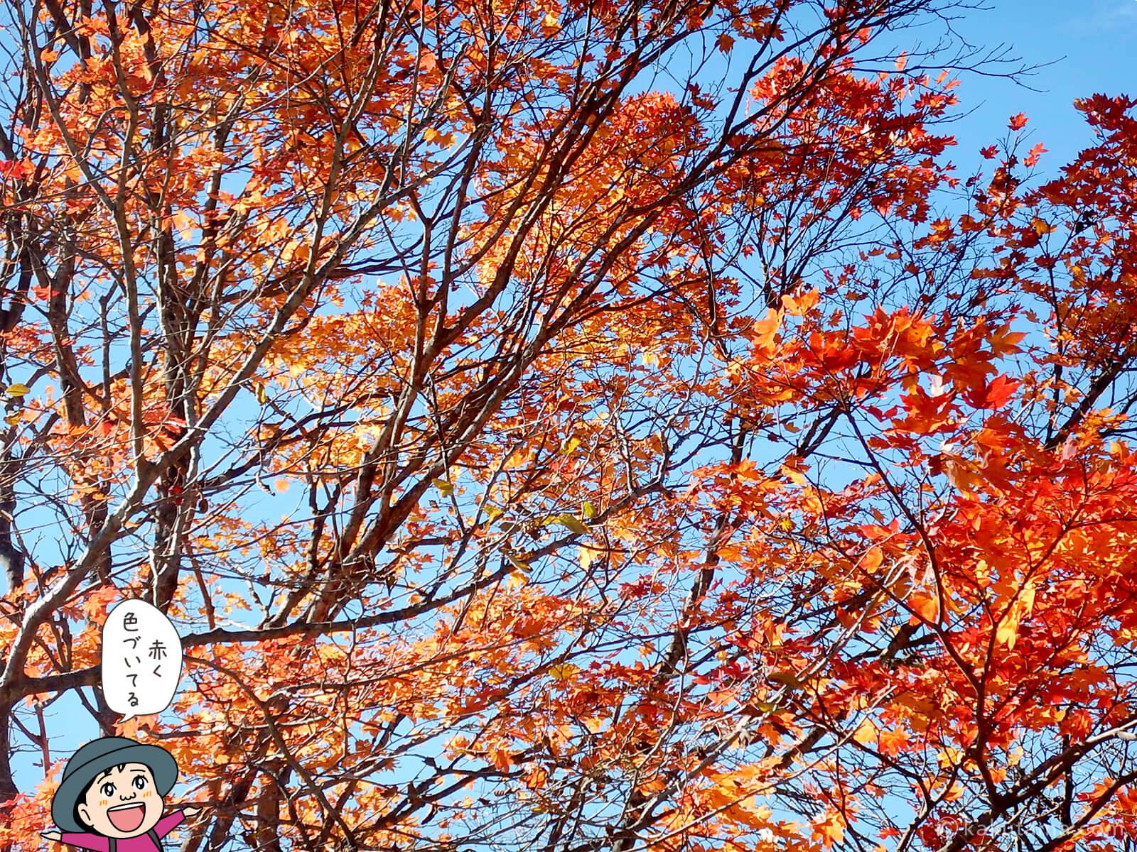 山の紅葉写真