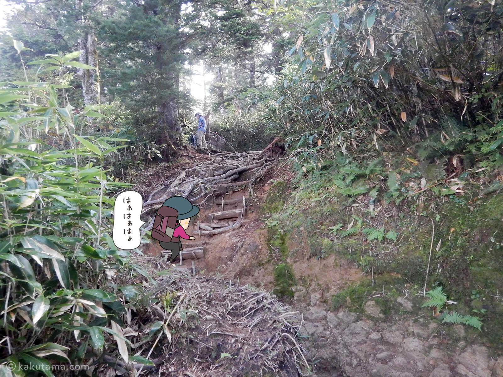樹林帯を登る6