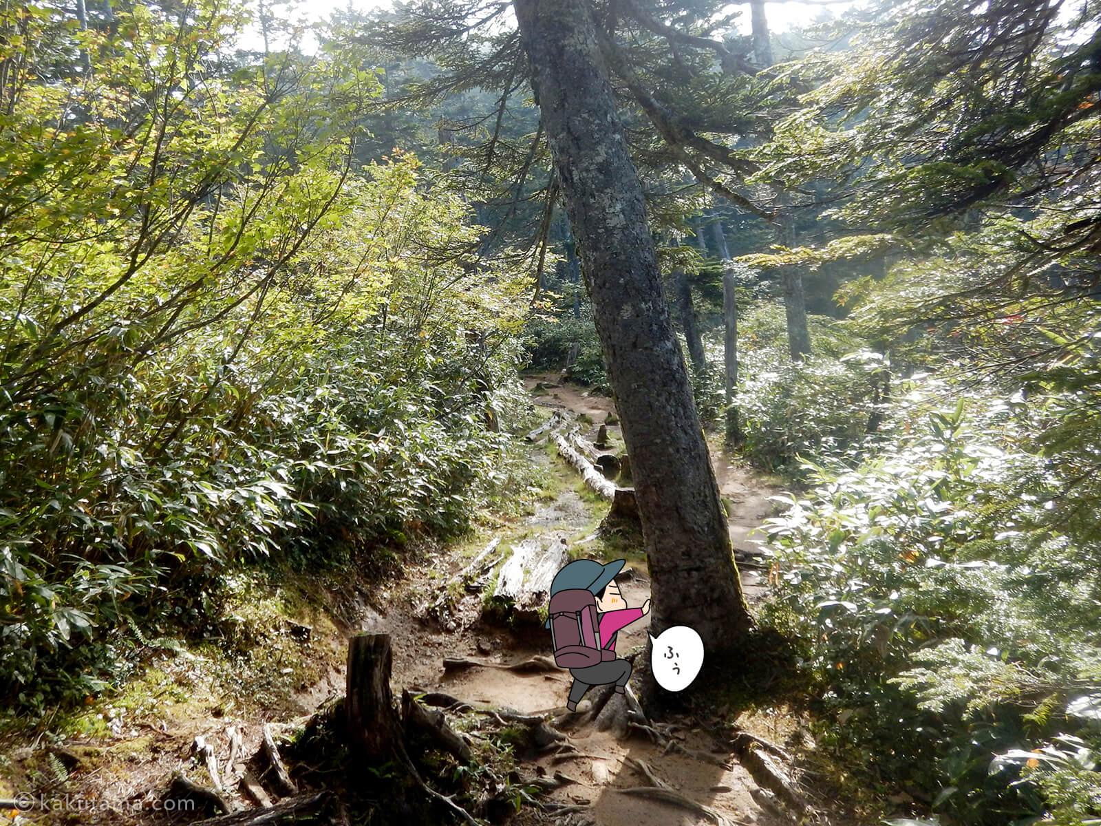樹林帯を登る7