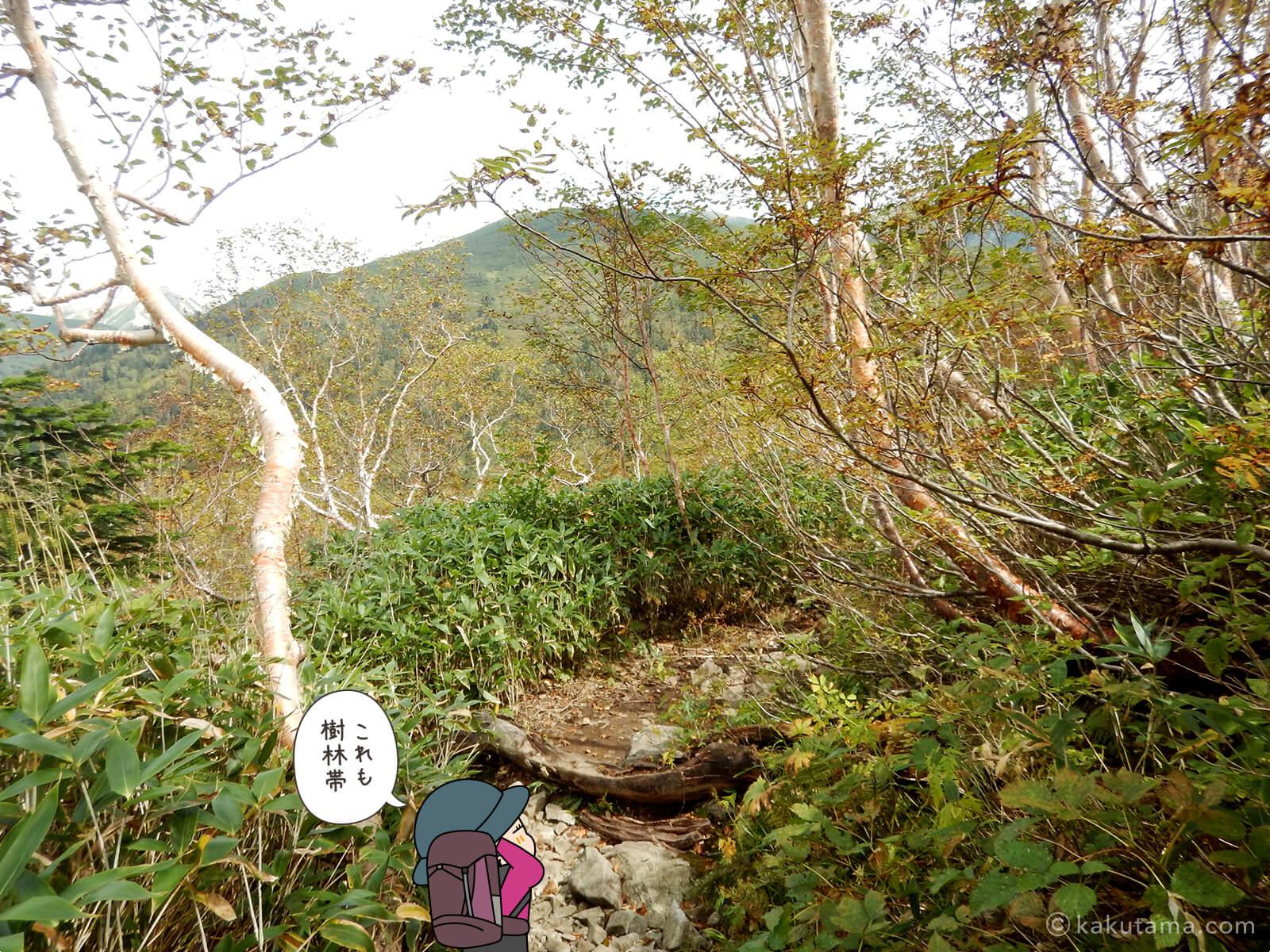 薄い樹林帯を歩く
