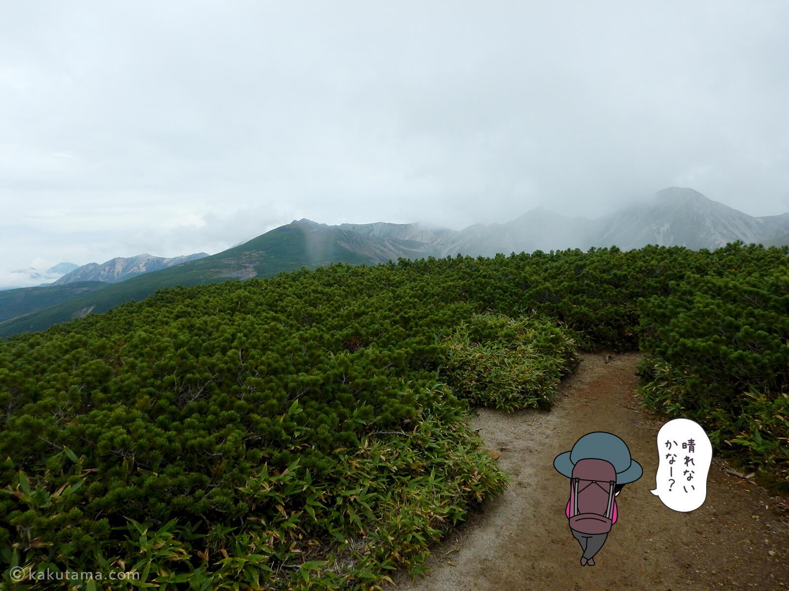 ハイマツの間から山が見える