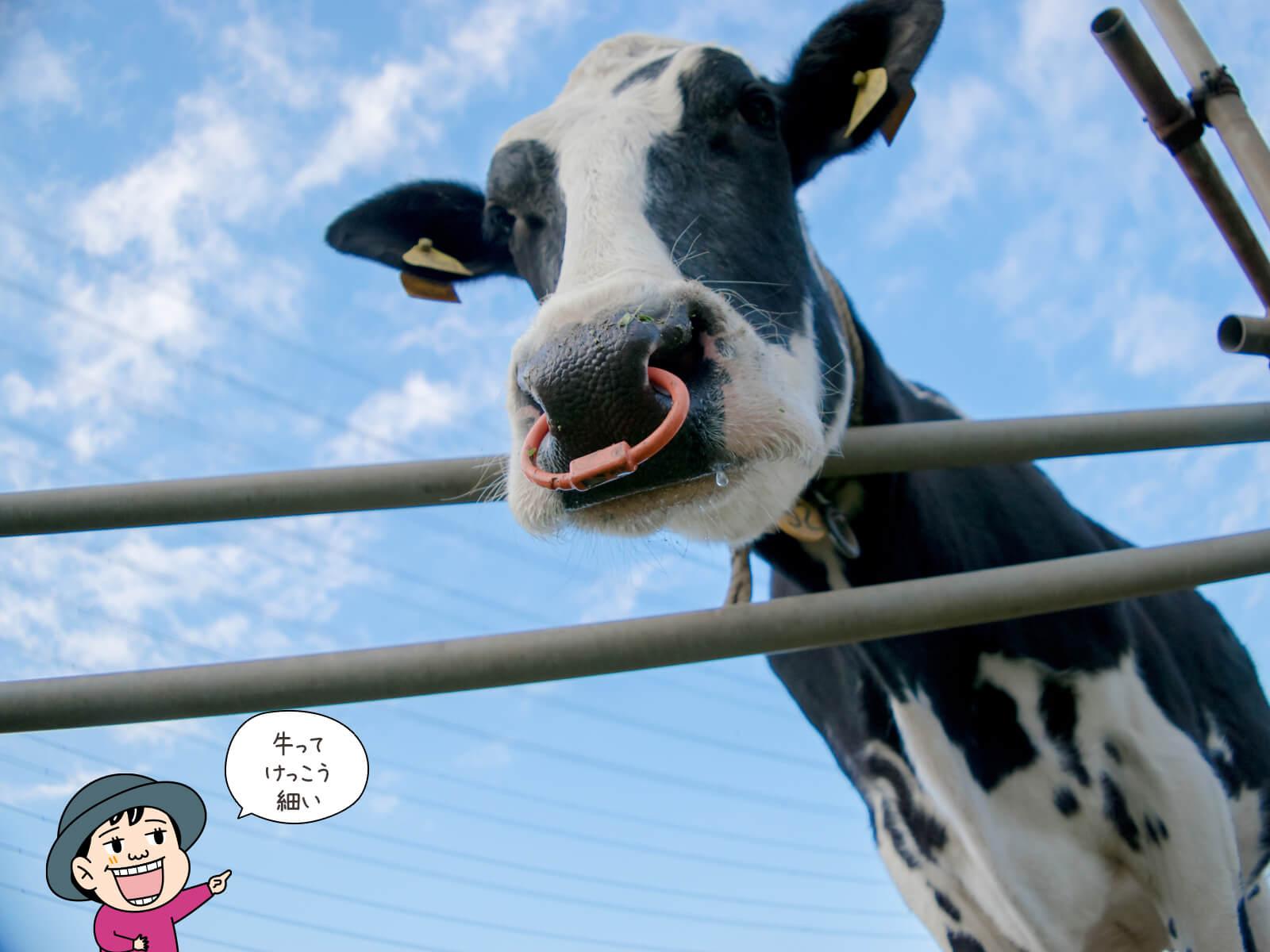 登山用語「牛首」にまつわる写真