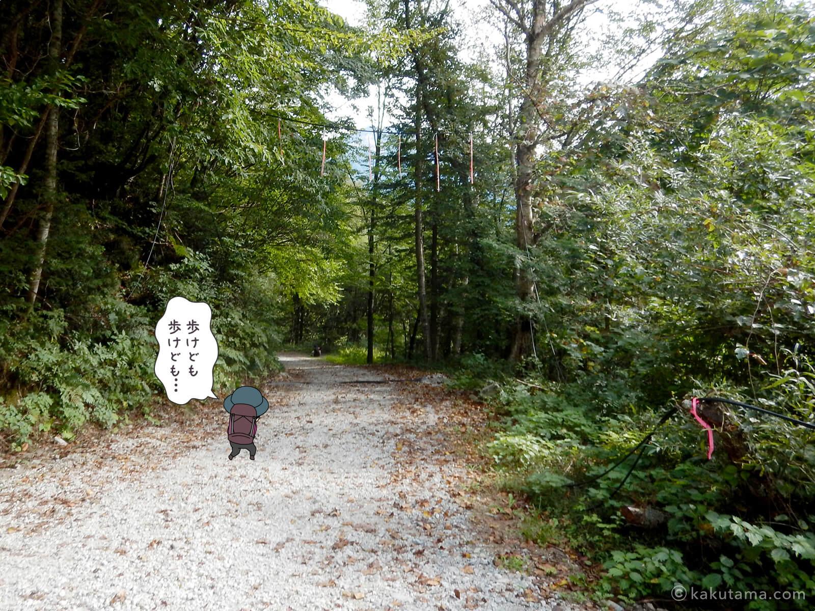 林道歩き5