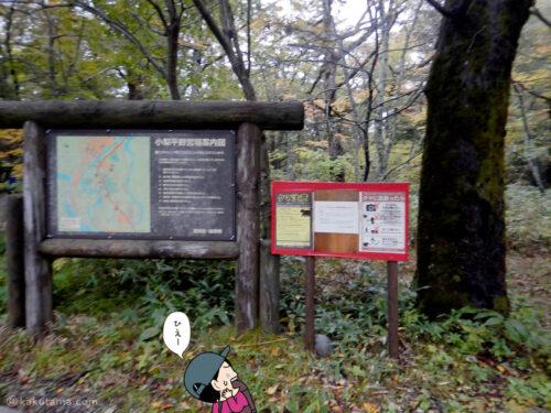 小梨平キャンプ場のクマ注意