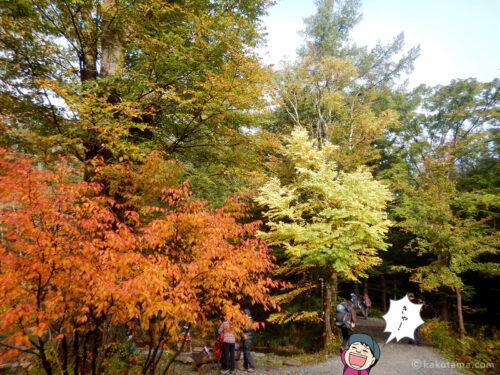 徳沢の紅葉