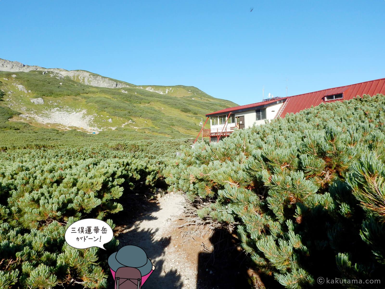 ハイマツの中に見える三俣山荘