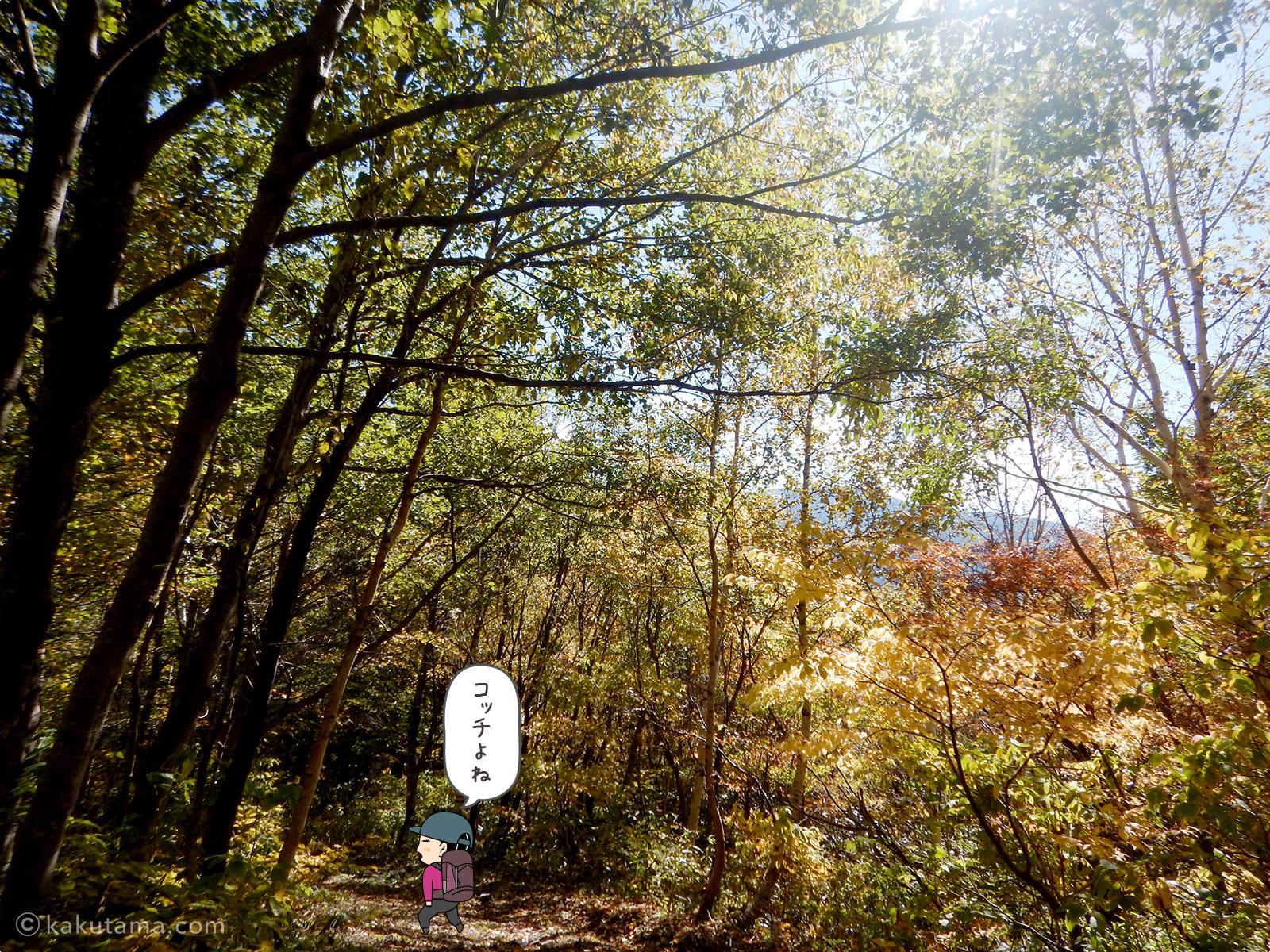 林道を歩く2