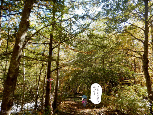 林道を歩く3