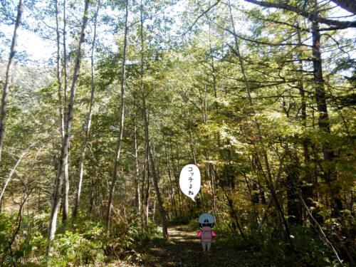 林道を歩く4