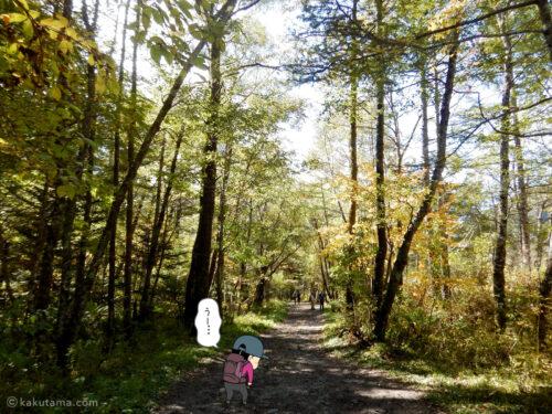 上高地への林道1
