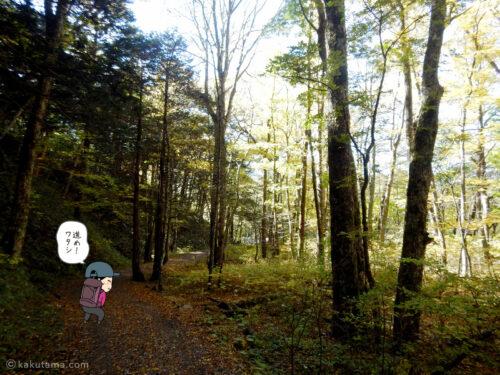 上高地への林道2