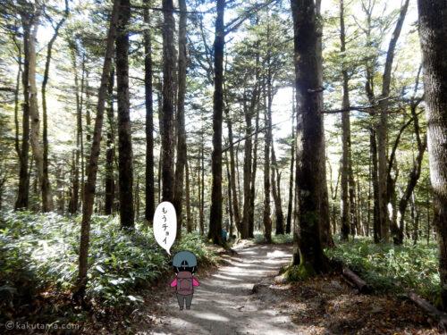 上高地への林道5