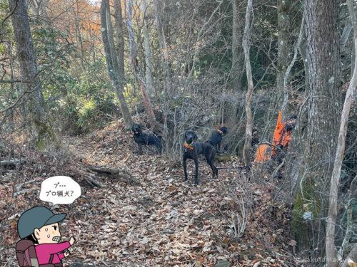 猟犬の訓練