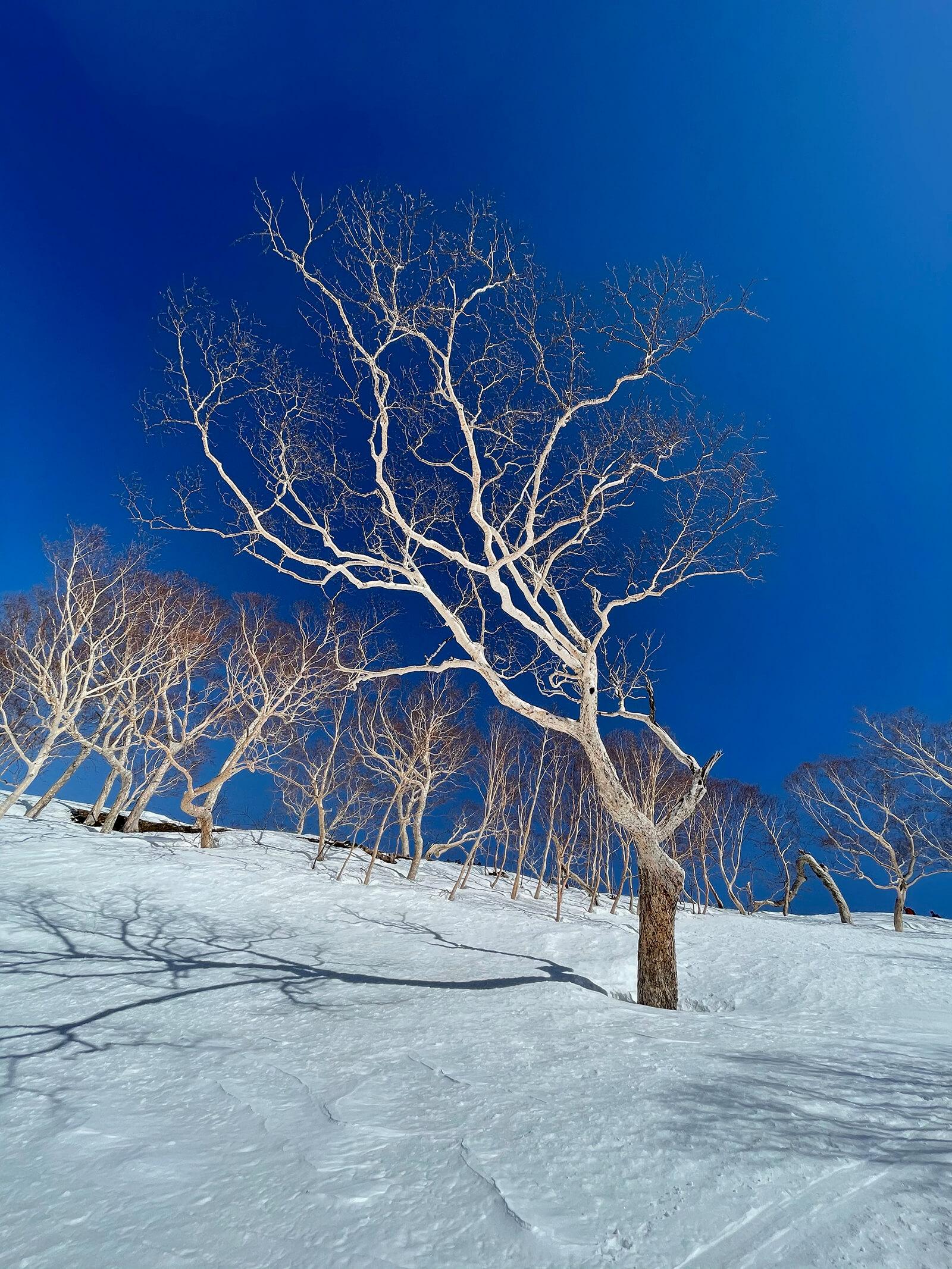 素敵だった木
