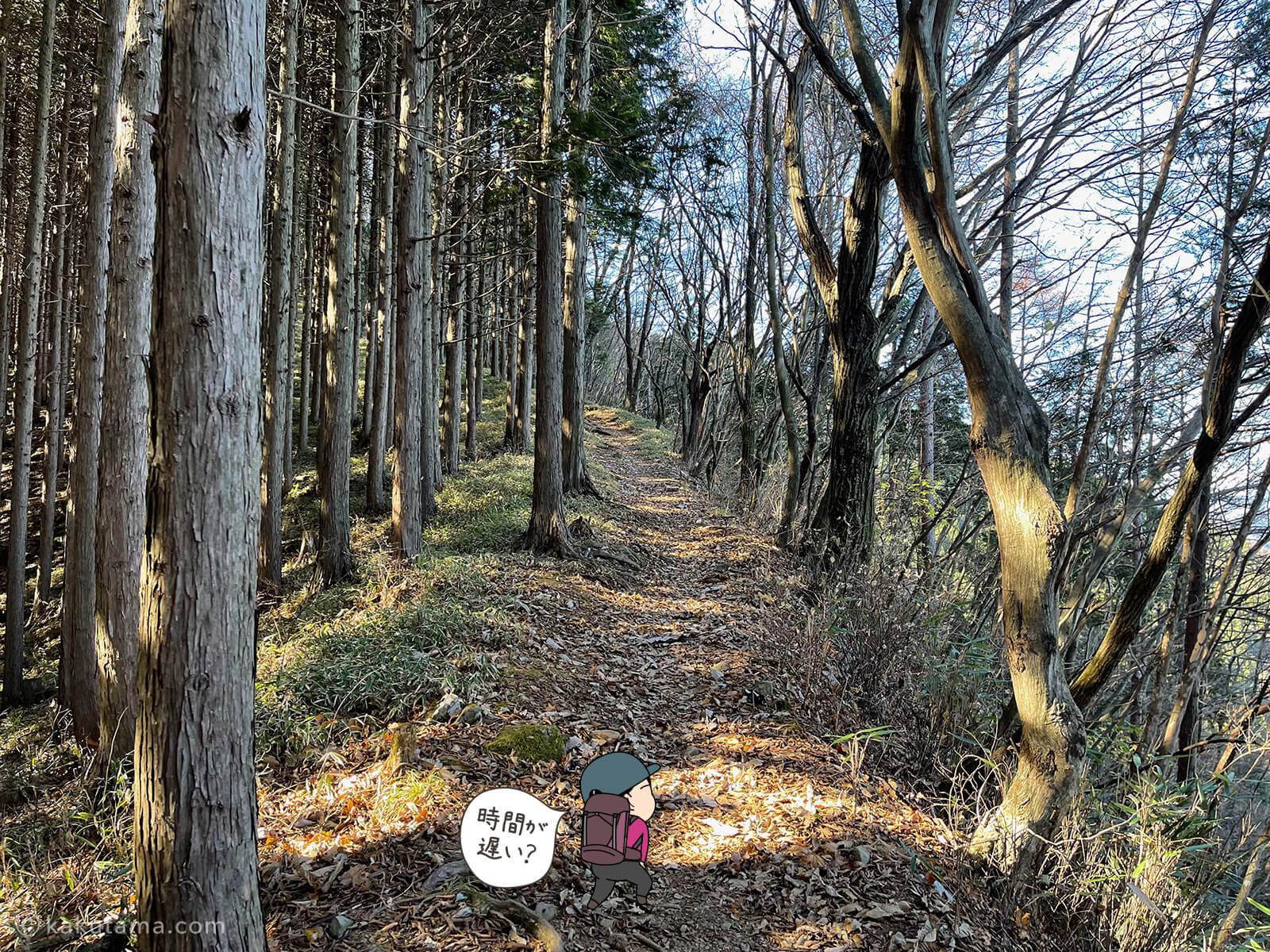 山道を歩く2