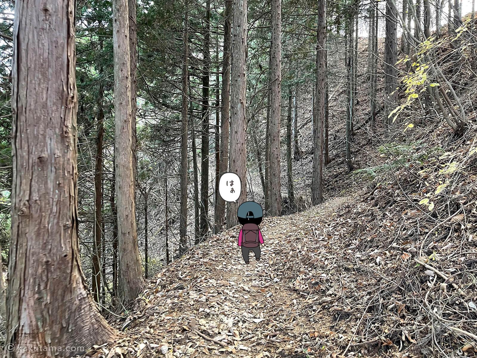 植林地を進む
