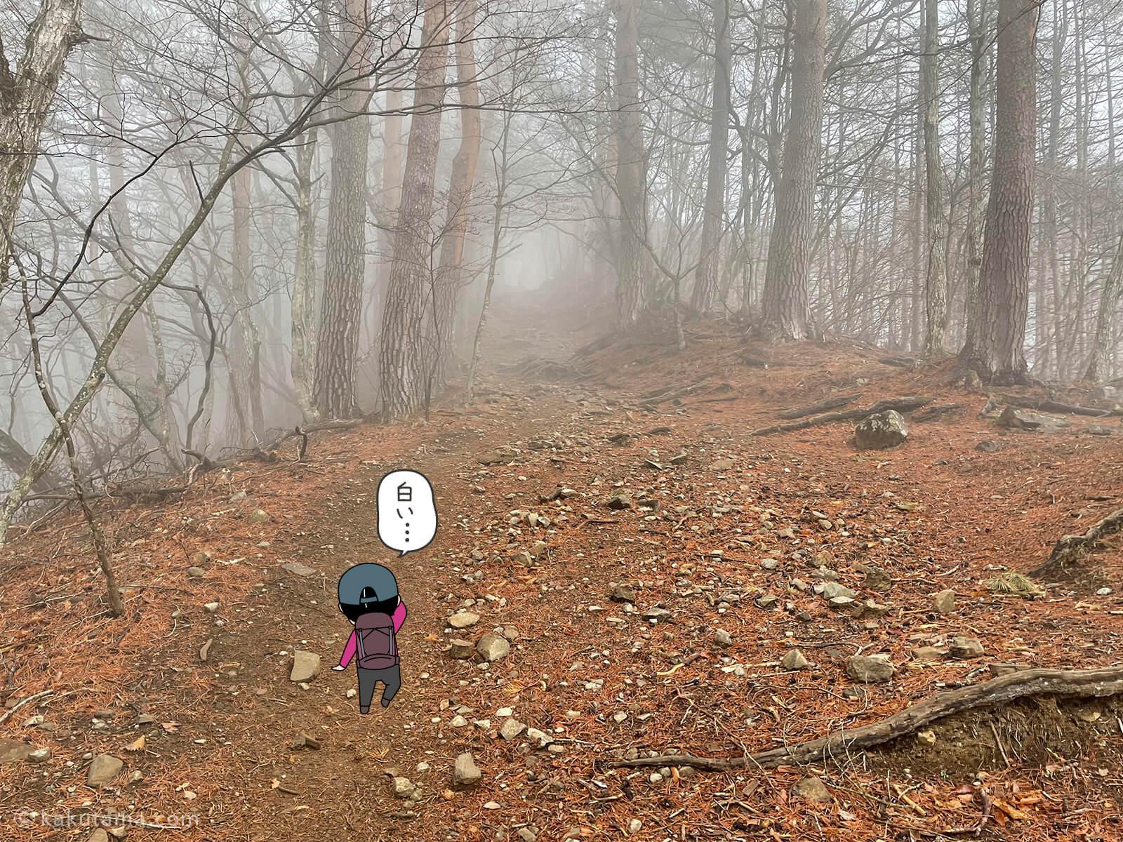ガスっている登山道1
