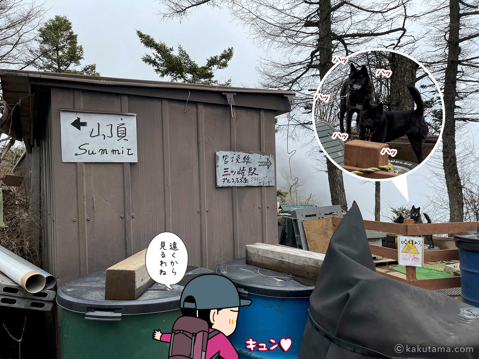 三ツ峠山荘の犬