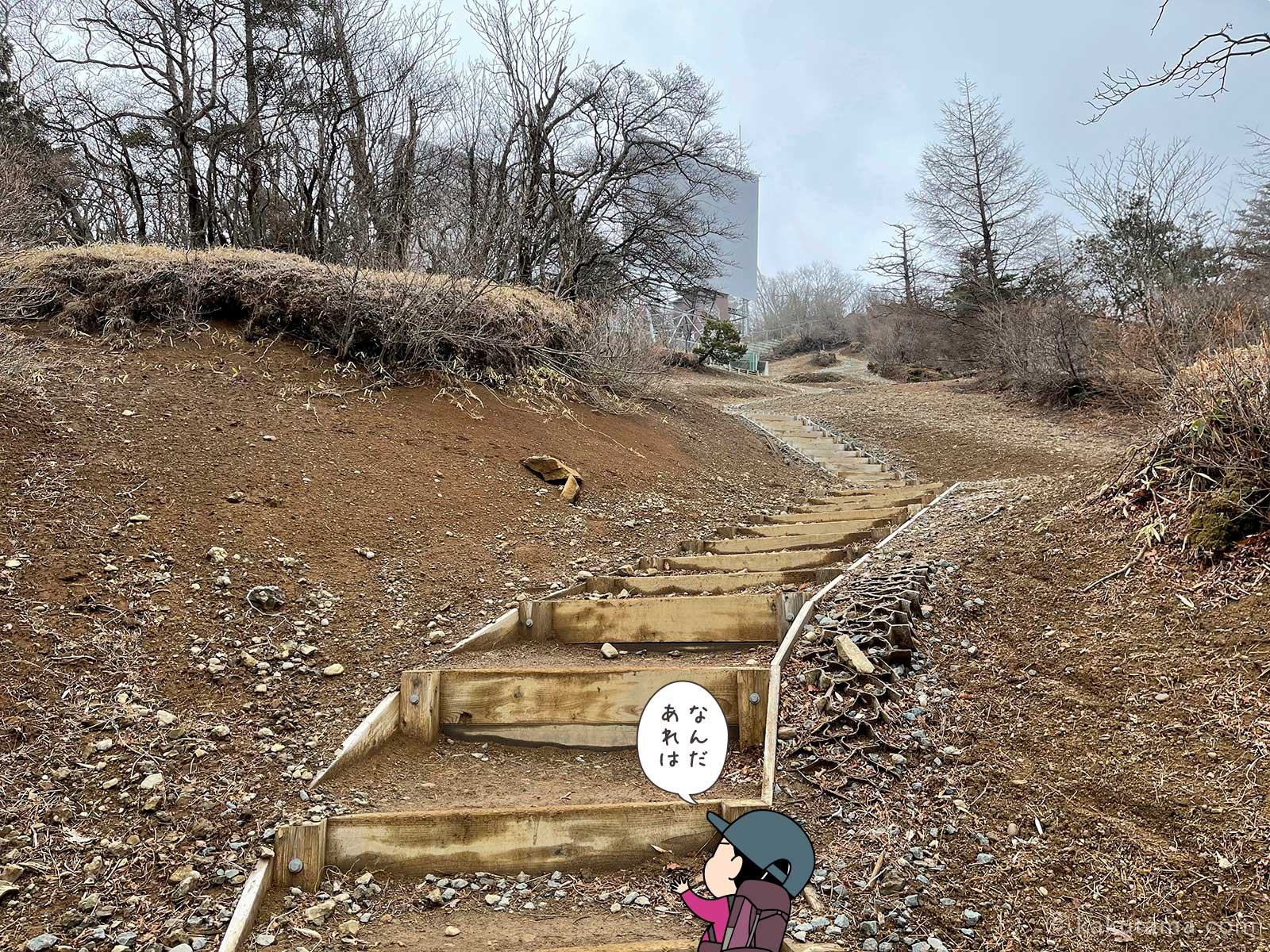 整備された木の階段2