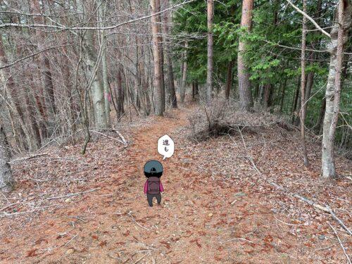 植林を歩く