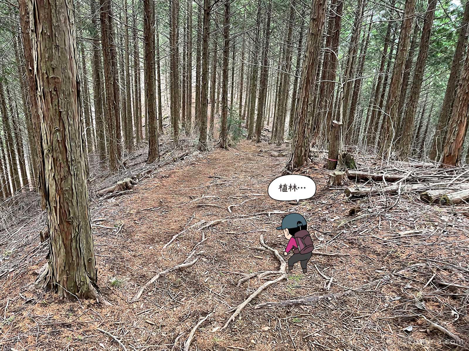 植林を歩く2