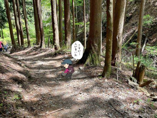 すっかり穏やかな登山道