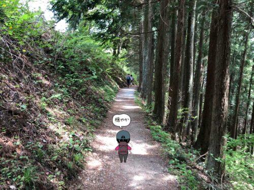 林道に入った
