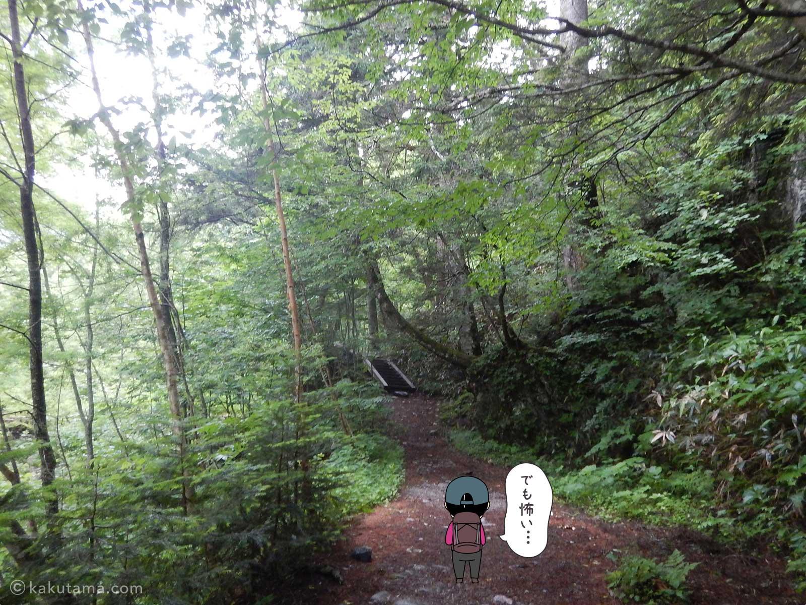 鬱蒼とした樹林帯を進む1