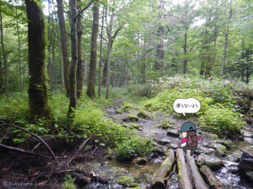 鬱蒼とした樹林帯を進む2