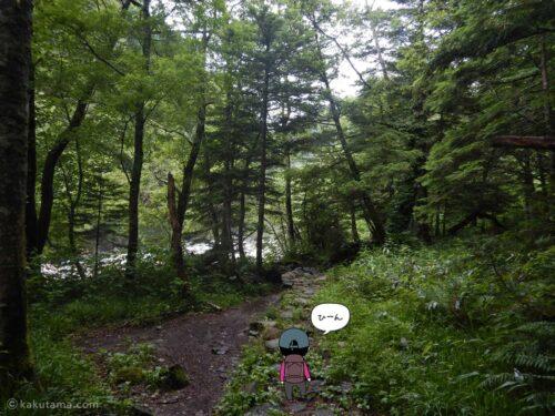 鬱蒼とした樹林帯を進む3