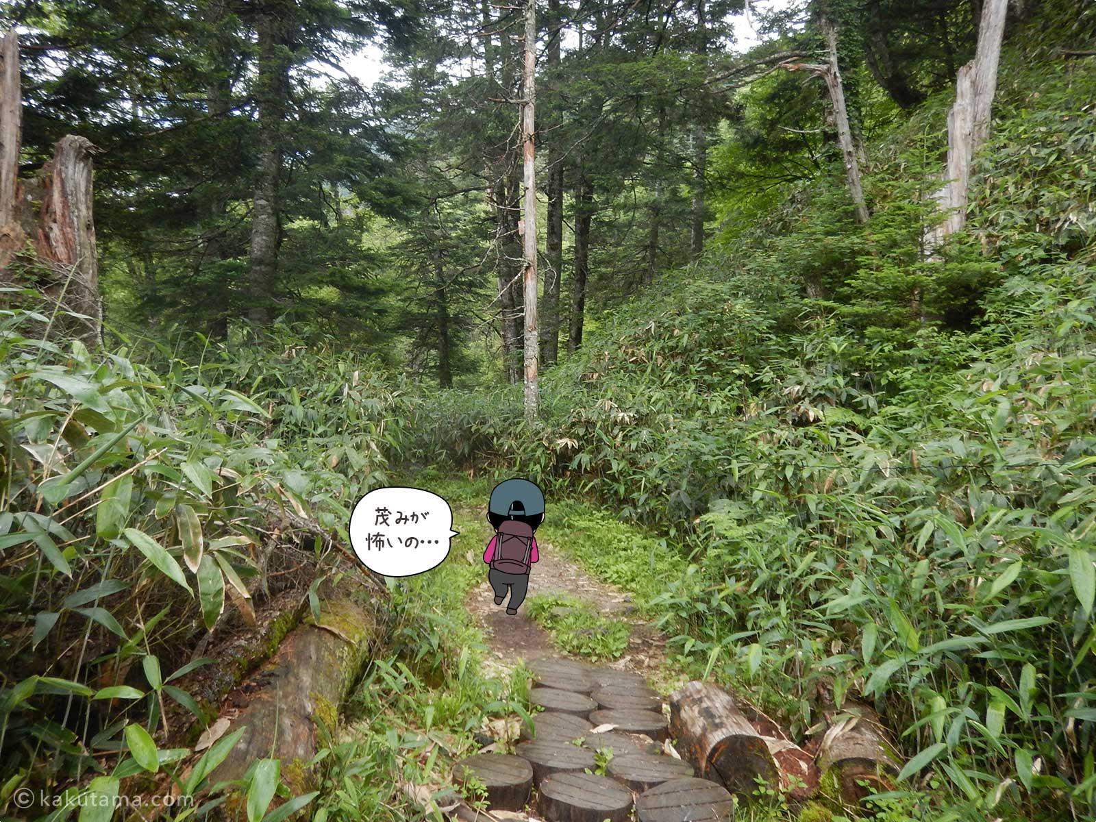 鬱蒼とした樹林帯を進む4