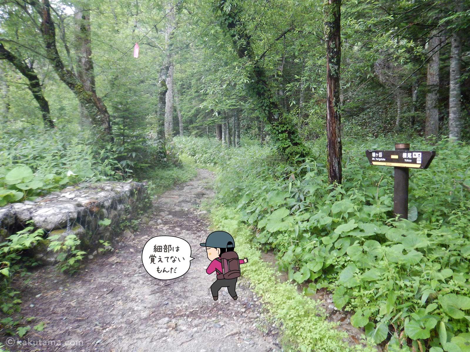 鬱蒼とした樹林帯を進む6