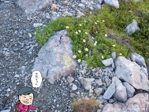 高山植物で心が落ち着く