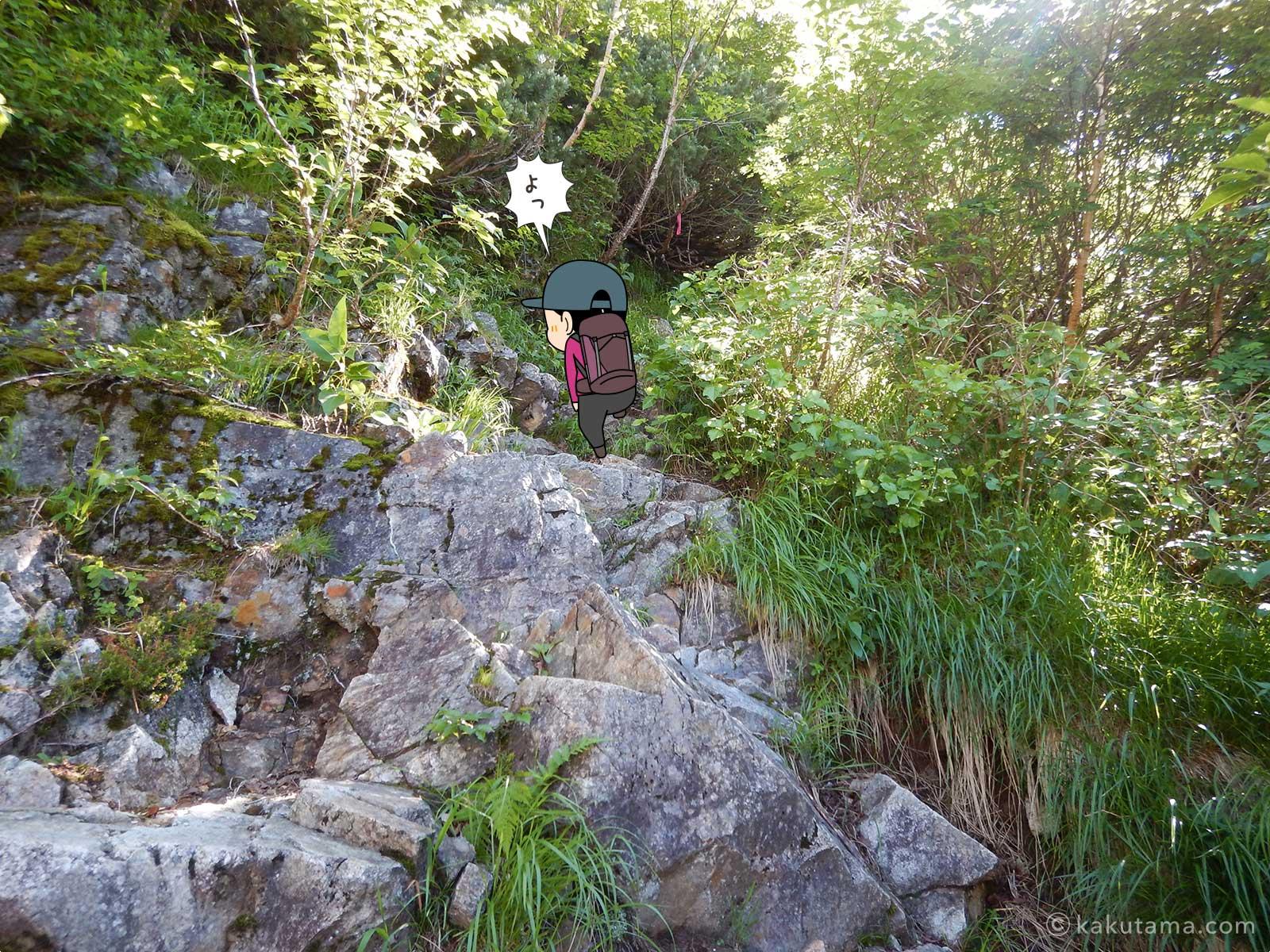 樹林帯を歩く1