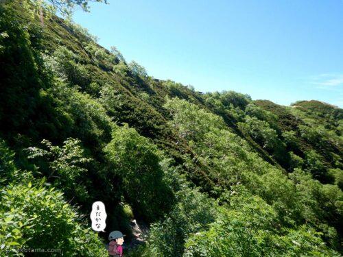 樹林帯を歩く3