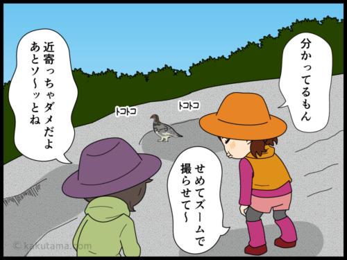 雷鳥に興味がある人には雷鳥は近づかず、雷鳥に興味がない人に雷鳥が近づく漫画