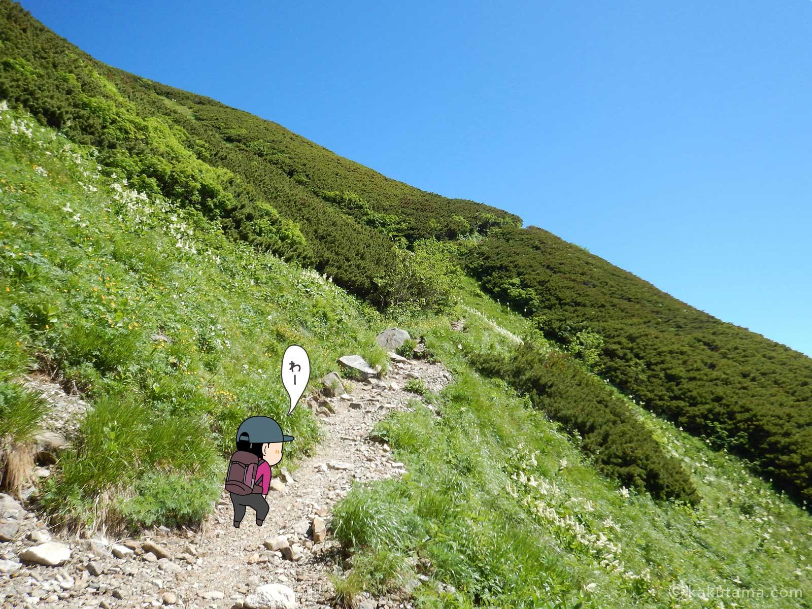 高山植物がたくさんの登山道