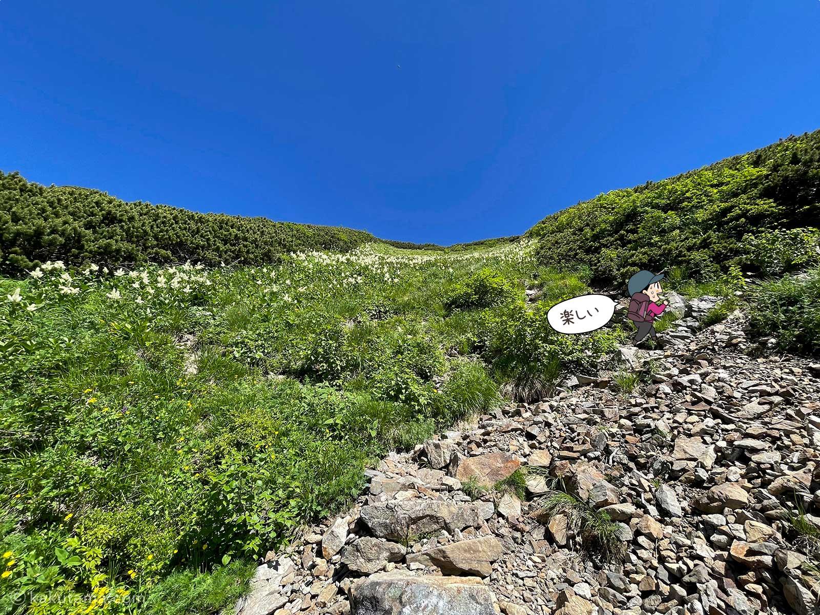 高山植物がたくさんの登山道2