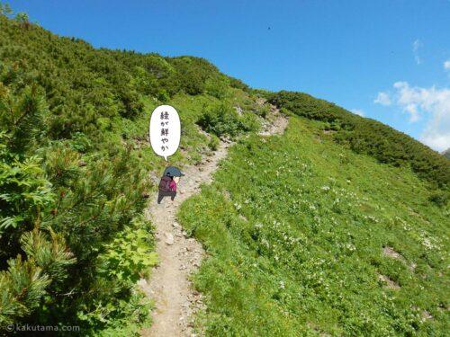 ひたすら登山道を登る