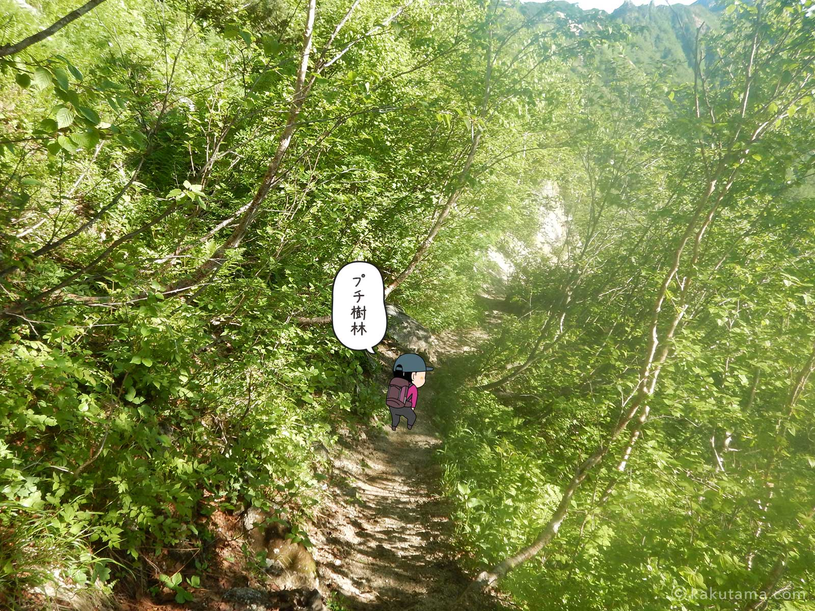 樹林帯を抜ける